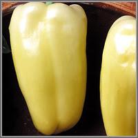 Сладкий перец сорт «Айвенго»