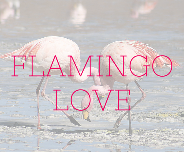 flamingo love shirt purse shoes