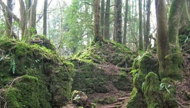 forest of dean star wars