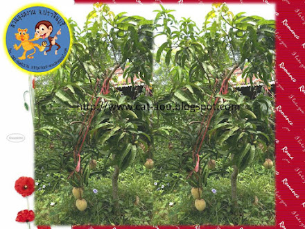Mango 9