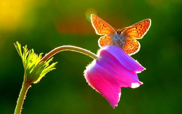 Butterfly Photo Sitting on Little Flower