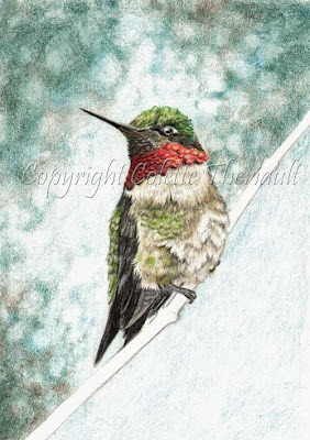 progress of a colored pencil drawing of ruby-throated hummingbird by Colette Theriault
