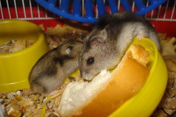 A Pipita e seu filhotinho