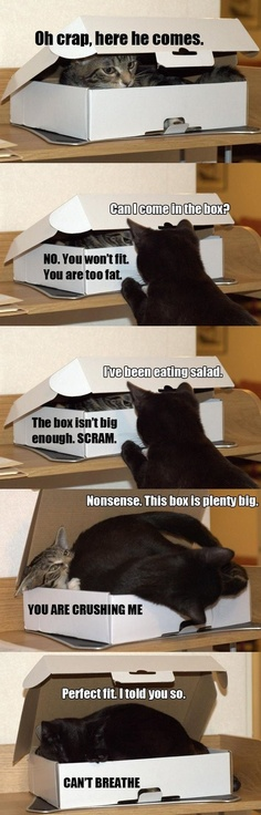 Cats try to share a box