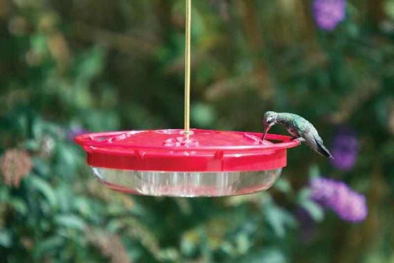 my favorite hummingbird and oriole feeders - Homemade Hummingbird Food