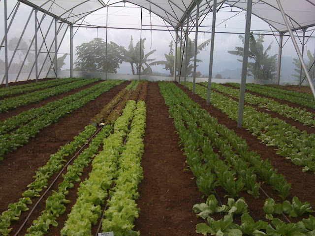 Workshop Bioteknologi Pertanian oleh LPPM IPB