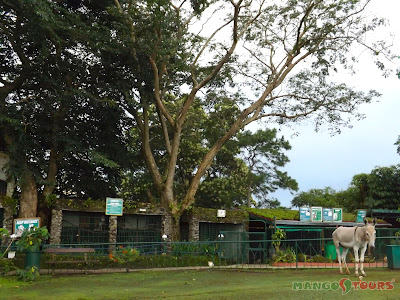 Mango Tours Tagaytay Mini-Zoo