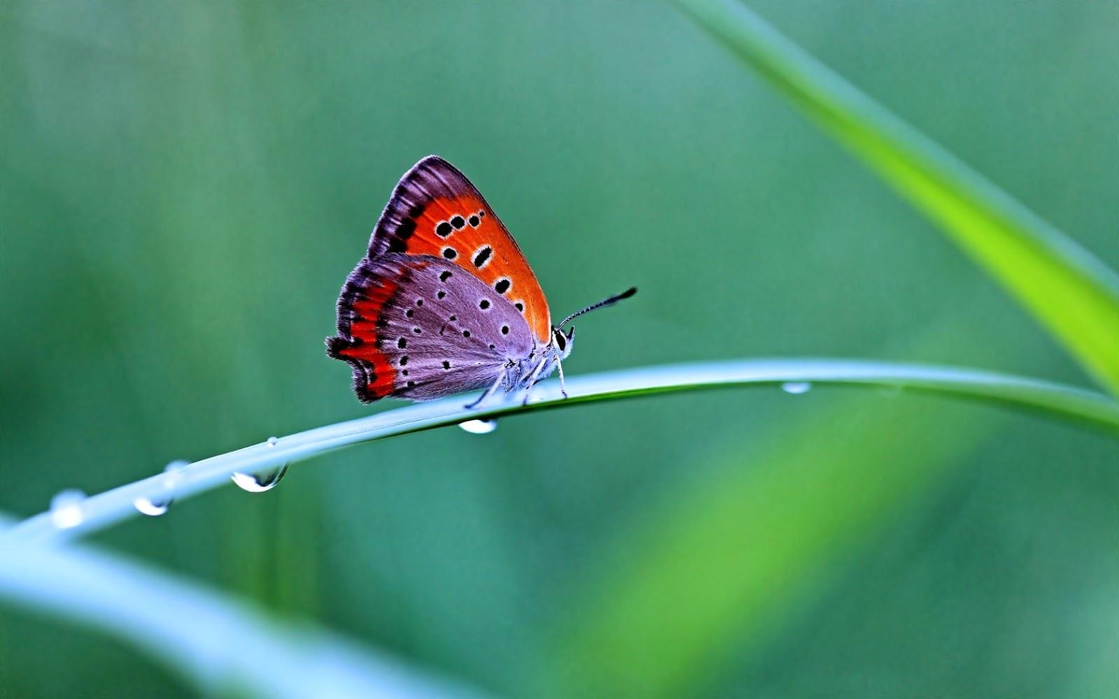 Las Mariposa Es El Incepto Mas Por Gracias A Su Hermosa Alas Que
