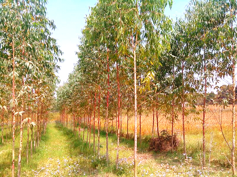 Plant Supplier India Plantation