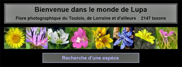http://www.monde-de-lupa.fr/home.html