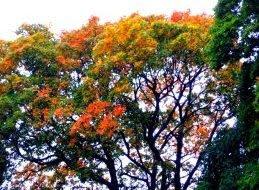 höstens granna färger
