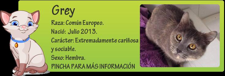 http://mirada-animal-toledo.blogspot.com.es/2014/01/se-llama-grey-tiene-unos-7-meses-y-fue.html