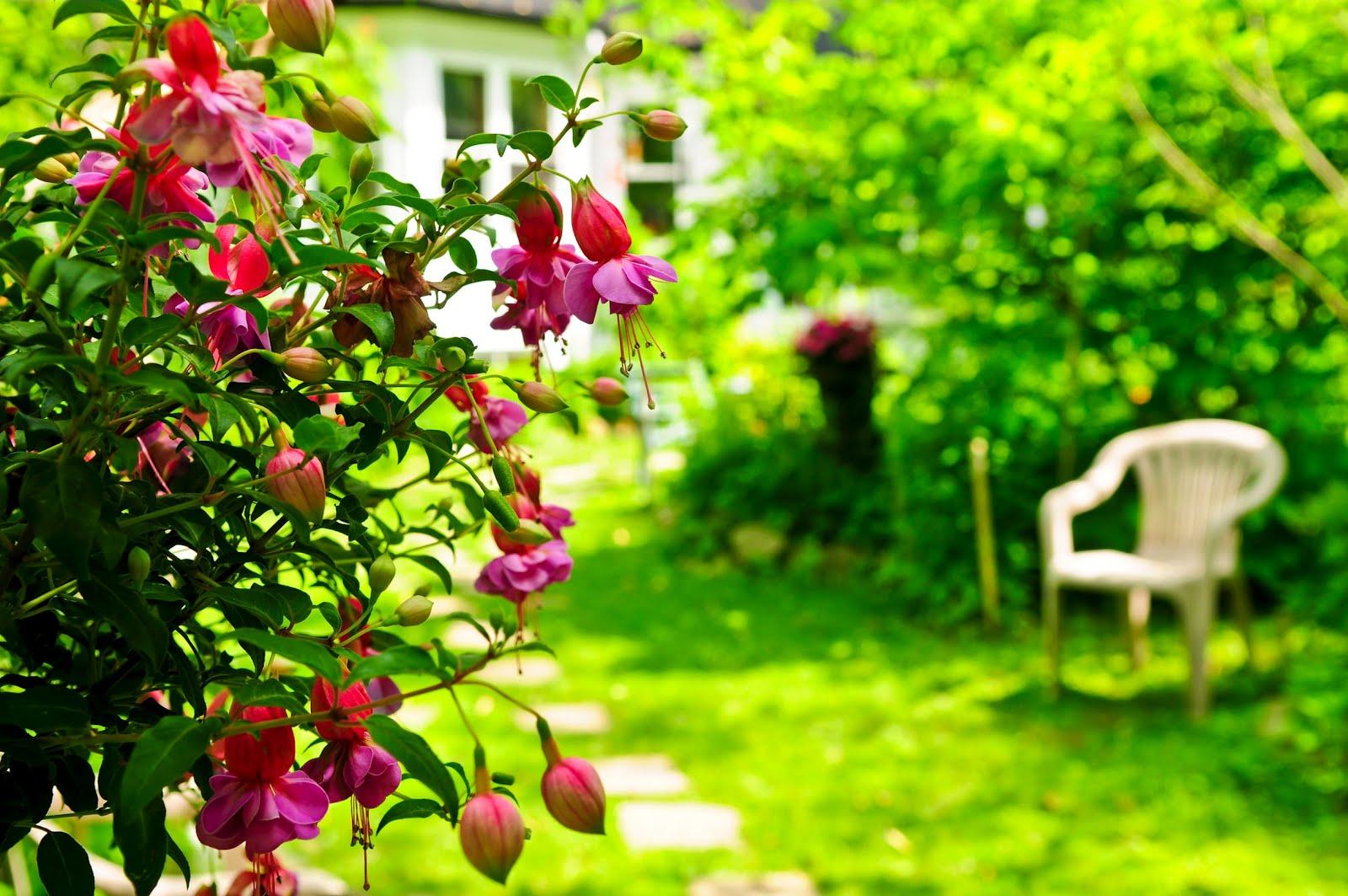 August 2012 august 2012 banco de imagenes gratuitas for Plantas perennes para jardin