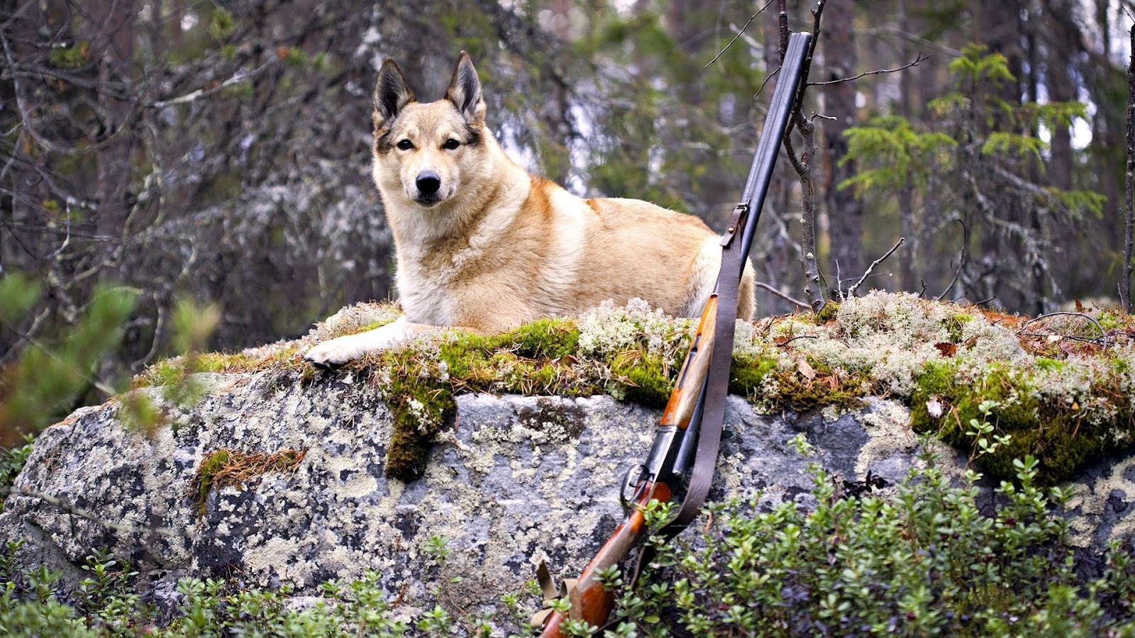 http://2.bp.blogspot.com/-s4ry8JjUoPs/T-hh1wodZaI/AAAAAAAACTE/Q6BiDnvRlPY/s1600/Dog_and_Hunting_Shotgun_HD_Wallpaper.jpg