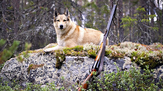 Hunting Dog and Shotgun HD Military Wallpaper