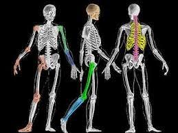Tulang & Gigi | Shaklee | www.ummudd80.blogspot.com