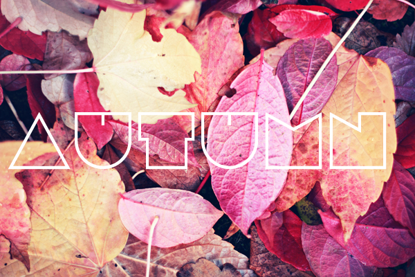 Snapshots - Autumn // Fawn and Rose