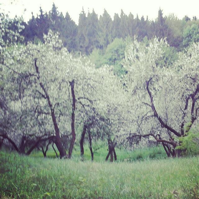 (Lietuvių) [8] Dviračiu žydint sodams Pavilny, Vilnioj ir Vilniuj