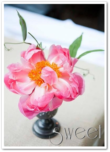 rosa pion, alla hjärtans dag, blommor till alla hjärtans dag