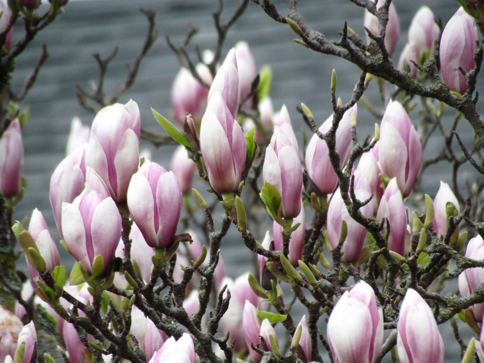Scene Through My Eyes Spring Flowers