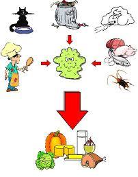 Contaminaci n alimentaria manipulaci n de alimentos - Fuentes de contaminacion de los alimentos ...