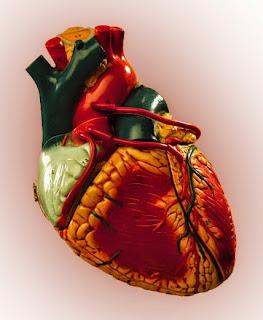 El sobrepeso es un factor de riesgo cardiovacular