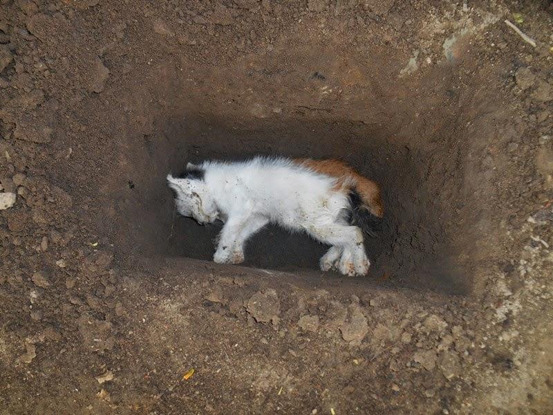 Pageblug Kucingisme Part 2 Selesai Agus Mulyadi Blog