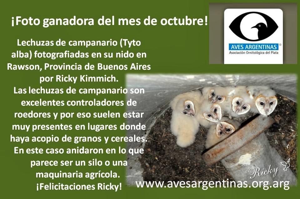 Fotos del Mes de Octubre 2013 en AVES ARGENTINAS