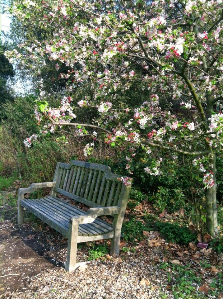 Bench under the Cherries in Descanso Gardens, photo by Maja Trochimczyk