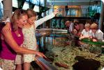 Ferienpark De Krim Angebote