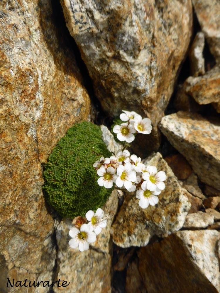 NaturArte: Peque�os tesoros que guardan nuestras monta�as