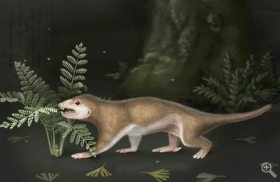 Researchers Discover 165-million-year old Mammalian Ancestor