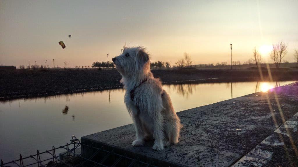 Dortmund Sonnenuntergang Hund Ruhrgebiet
