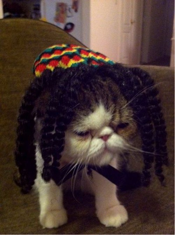 funny cat pictures, bob marley cat