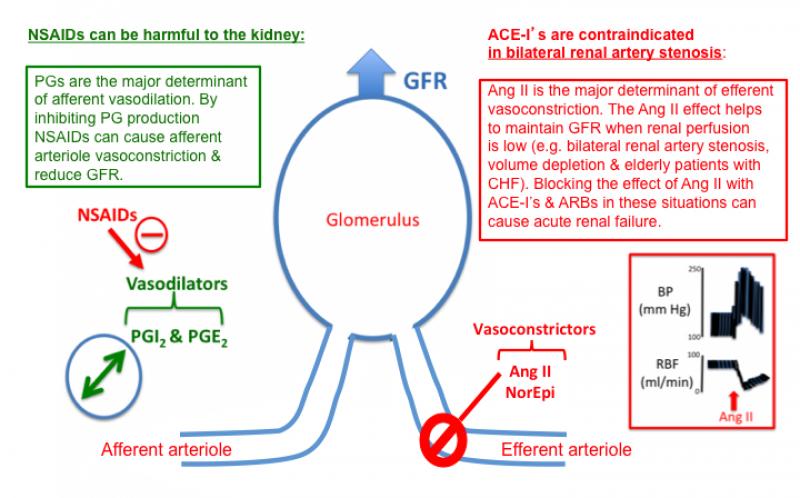 Lisinopril And Kidneys