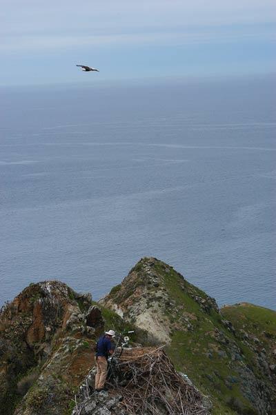 Channel Island National Park Eagle Cam