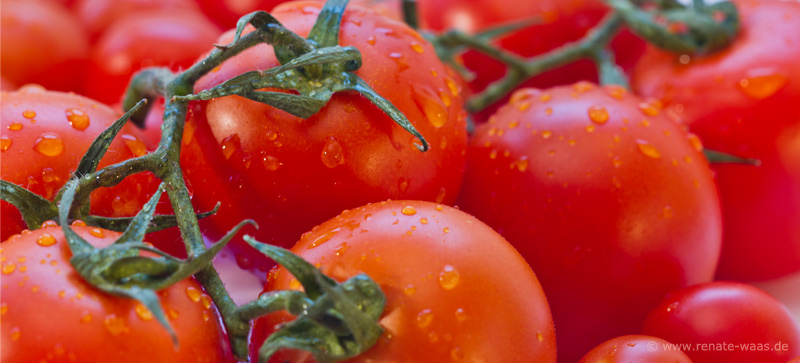 gartenblog geniesser garten tomaten anzucht. Black Bedroom Furniture Sets. Home Design Ideas