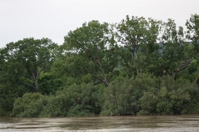 Babuino en las ramas de los árboles