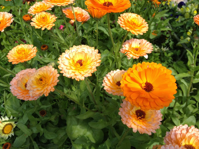 Orange Flowers She Knits in Pearls