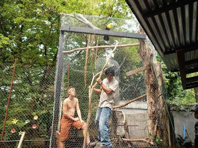 Keel-billed Toucan in Nicaragua