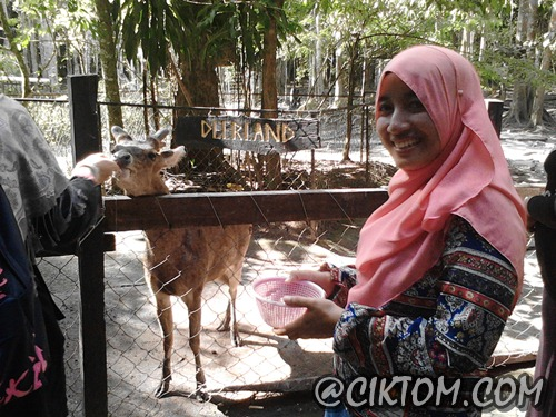 Miss Jajanto happy dapat bagi rusa makan ubi