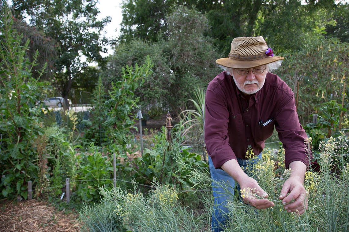 <strong>LA Garden Blog  </strong>