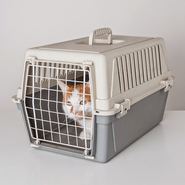 cat transport melbourne