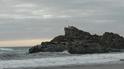 leoni-marini-cile-caracautin