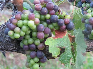 Purple and Green Grapes