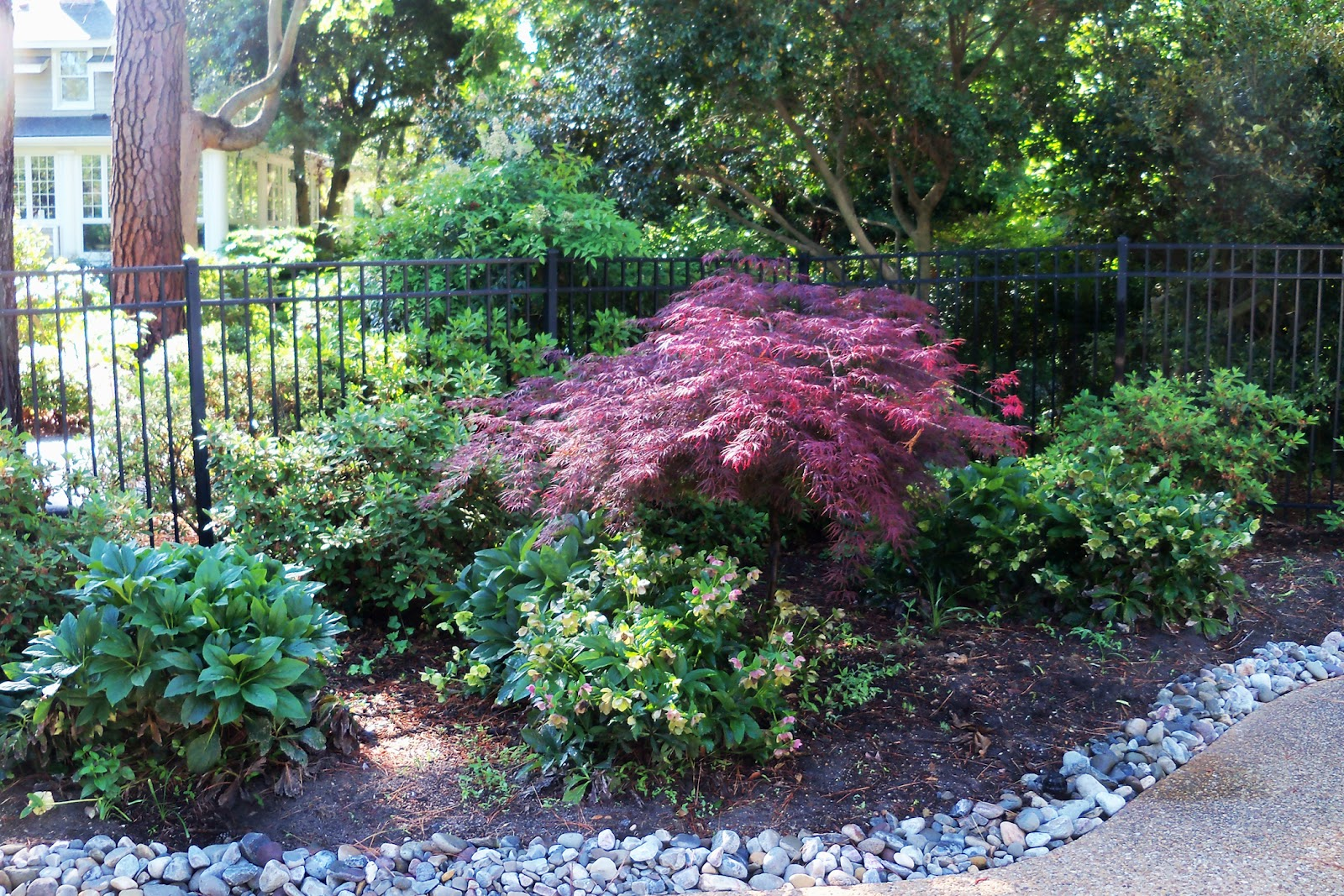 Dr dan 39 s garden tips enhancing your landscape with for Professional landscape design