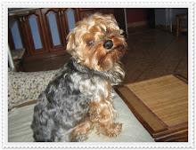 Maciuś 2008