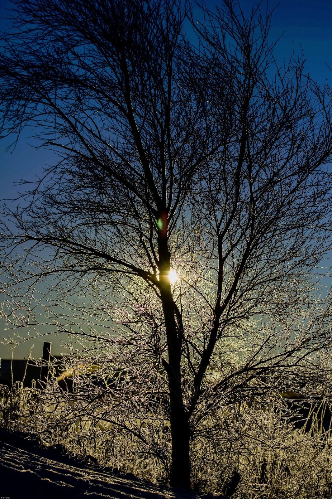 Snødekt bakke og vårsol