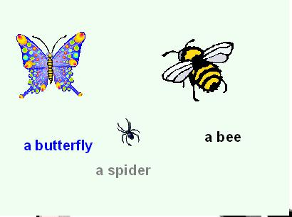 Bee - Buterfly - Spider