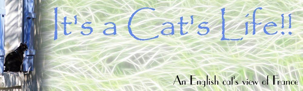 It's a Cat's Life!!